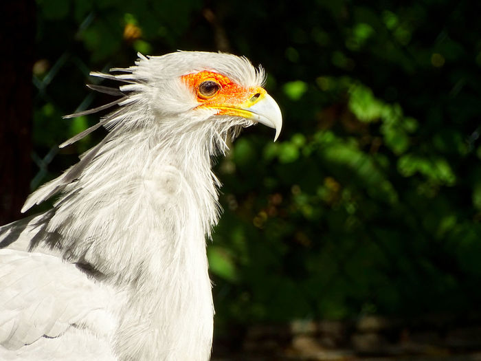 Bird Bird Of Prey Black Background Vulture Multi Colored Beak Portrait Feather  Headshot Side View Tropical Bird