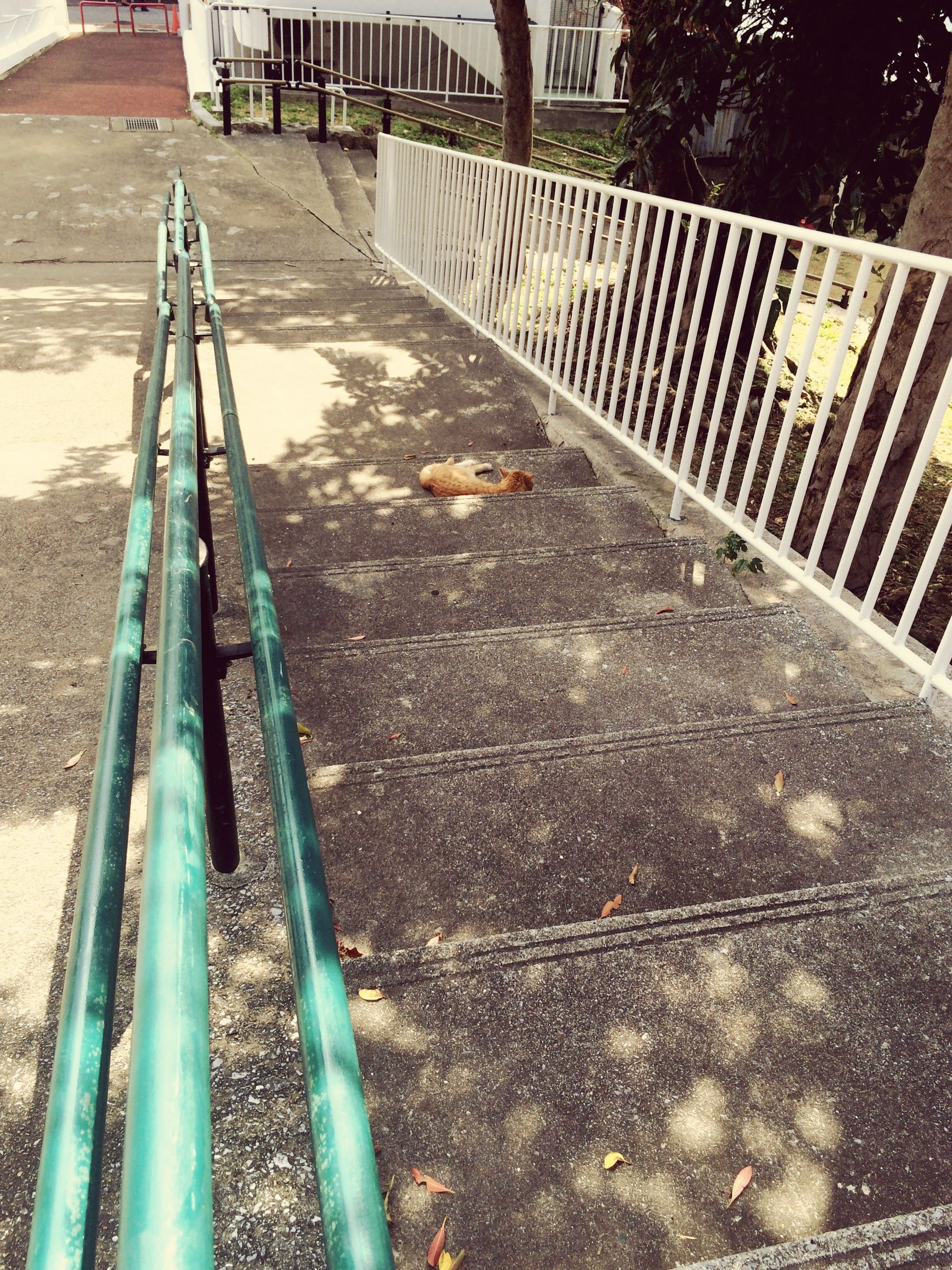 animal themes, one animal, domestic animals, pets, high angle view, mammal, metal, dog, bird, animals in the wild, transportation, railing, day, outdoors, wildlife, railroad track, built structure, sunlight, no people, street