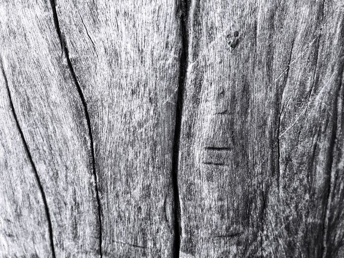 Wood texture. Textured  Wood - Material Full Frame Backgrounds Close-up Rough Trunk Pattern No People Tree Trunk Tree Wood Old Plant Natural Pattern Nature Blackandwhite Plank Day Weathered