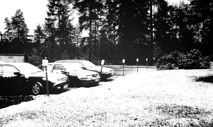 First Snow makes everything Blackandwhite & Winteriscoming
