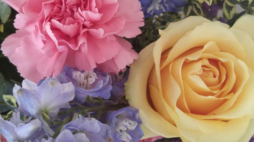Pastel Power unfiltered Flowerporn Flower Collection No Filter Flowers Bouquet Of Flowers Unedited Photo Beautiful Flowers Things I Like beautiful flowers! The Color Of Life The Color Of Spring Home Is Where The Art Is Neon Life