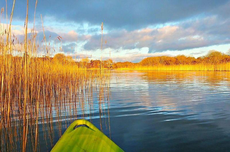 Ireland. Water Cloud - Sky Sky No People Outdoors Nature EyeEmNewHere Beauty Silence Relax Kayaking Kayak Lake Sunset Reflection Sea Plants Waterplants Tree Beauty In Nature Day Close-up Reed - Grass Family Reeds Green Kayak