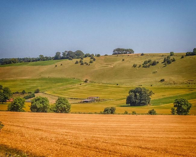 Ridgeway landscape Uk The Ridgeway National Trail Walking Rambling Landscape Agriculture Environment Field Rural Scene Land Plant Tranquil Scene Sky Tranquility Farm Scenics - Nature Growth Beauty In Nature Tree Nature No People Day Clear Sky Crop