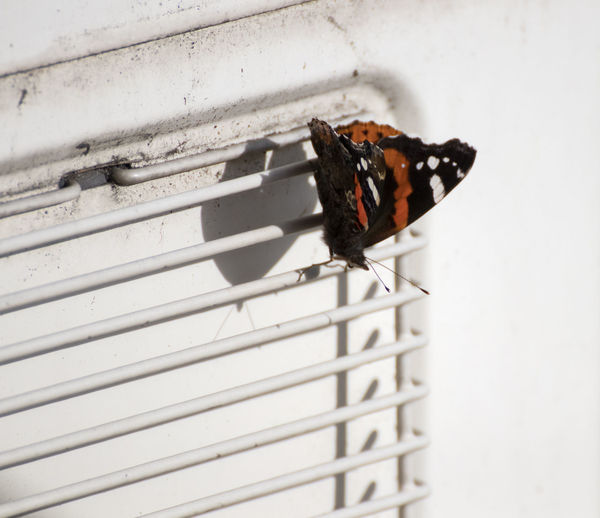 Close-up of butterfly on wall