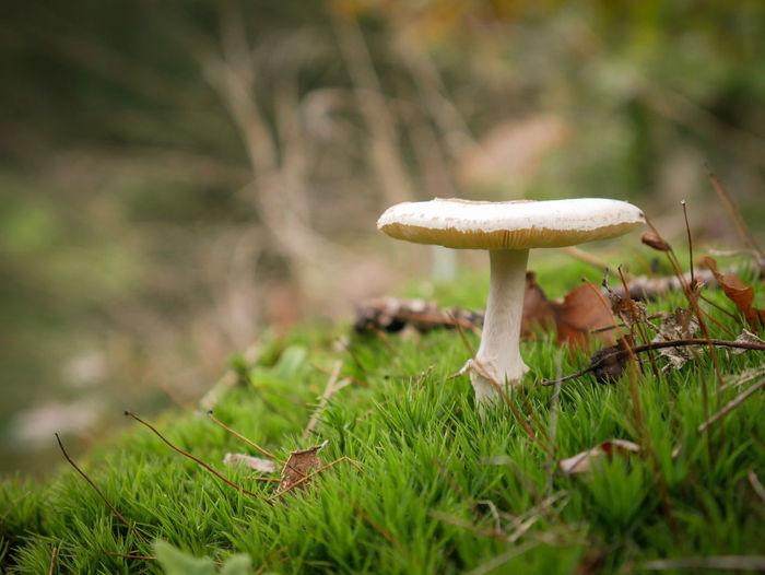Mushroom Nature Growth Grass Outdoors