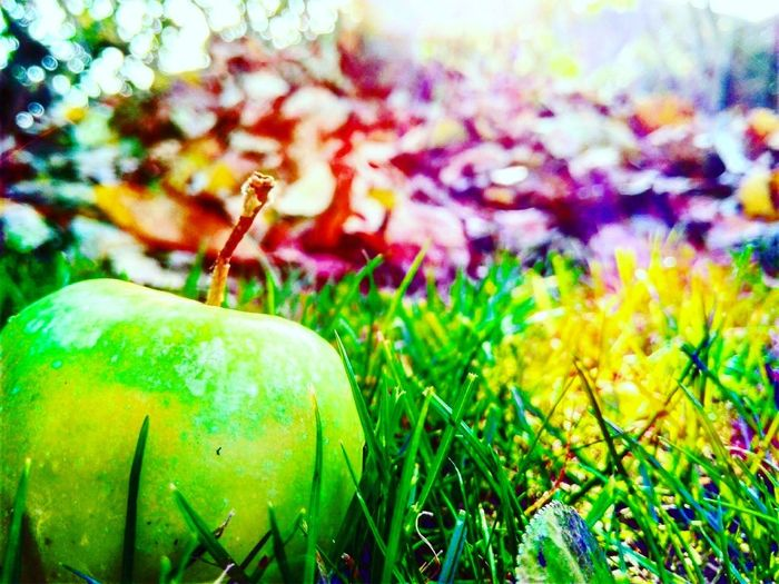 Grass Green Color Nature Outdoors Freshness Beauty In Nature Day Beautiful Beauty In Nature Perfect Growth No People Close-up First Eyeem Photo
