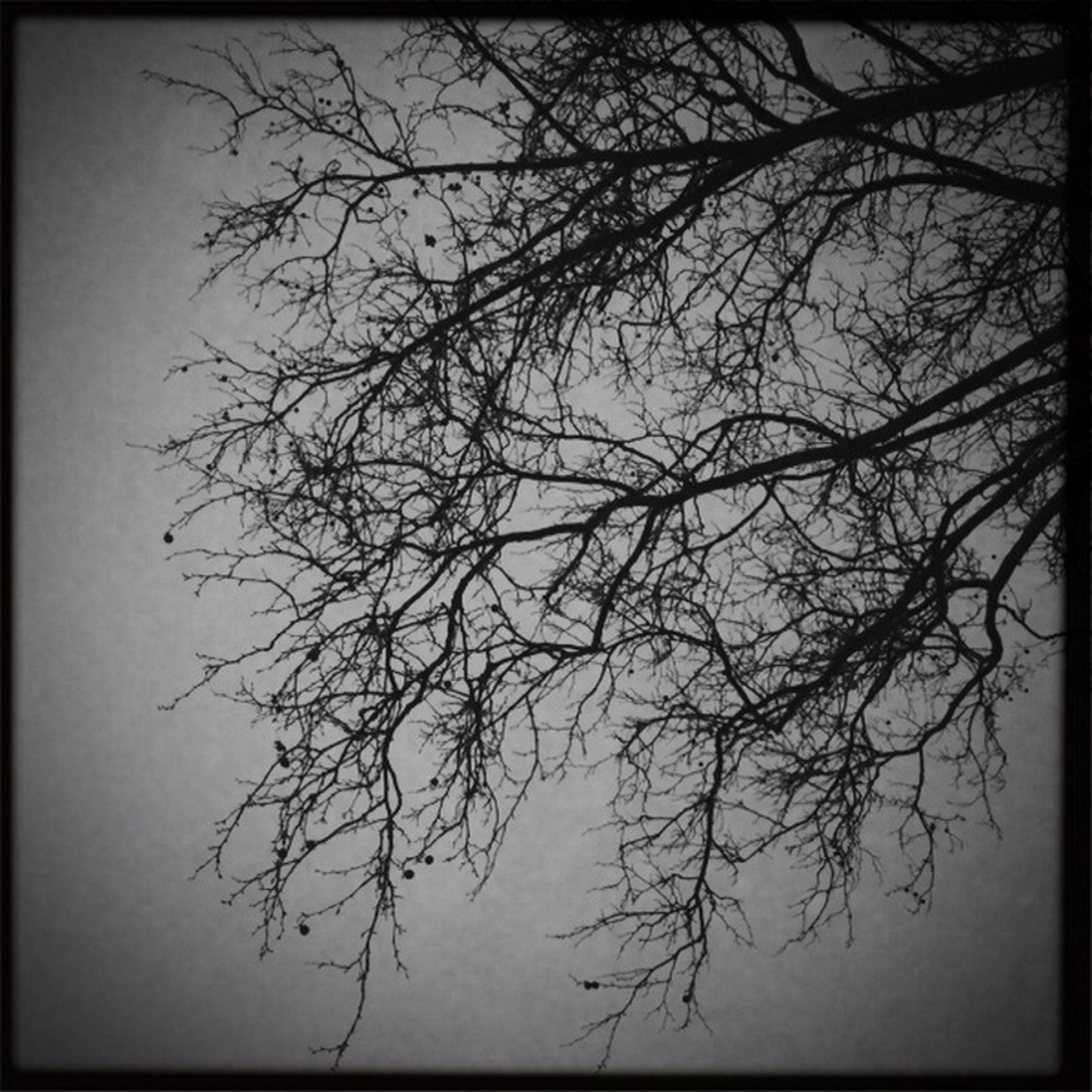 transfer print, bare tree, branch, tree, auto post production filter, tranquility, low angle view, nature, silhouette, beauty in nature, sky, clear sky, scenics, tranquil scene, growth, no people, outdoors, dusk, vignette, day