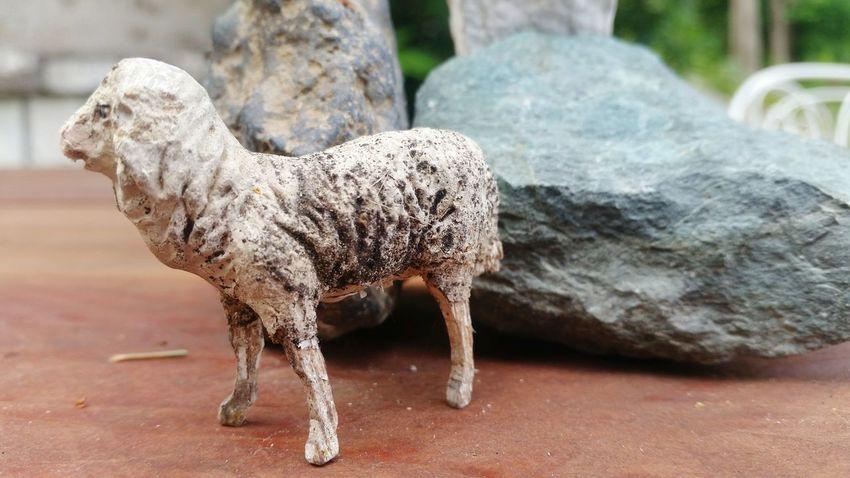 Sheep EyeEm Selects Animal Themes Close-up