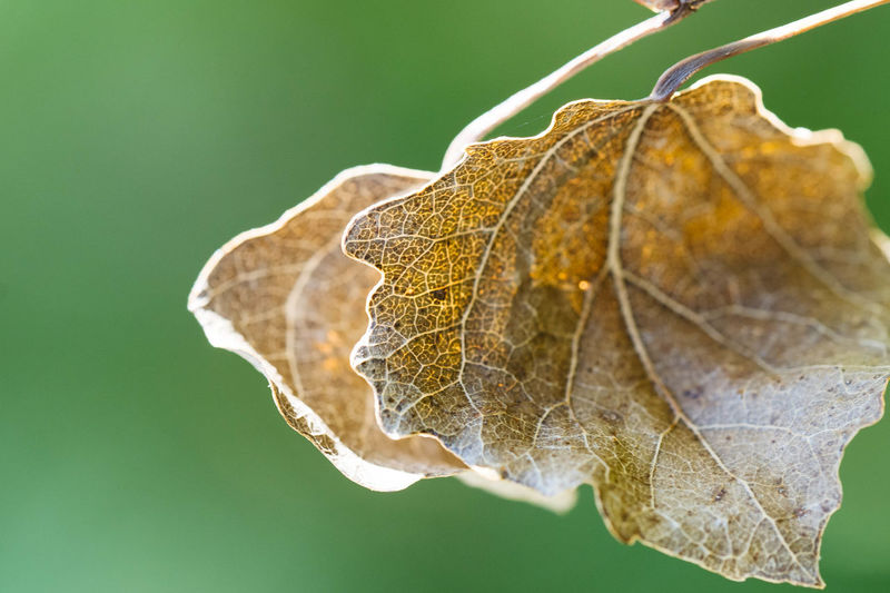 Close-up of dried leaf on plant during autumn