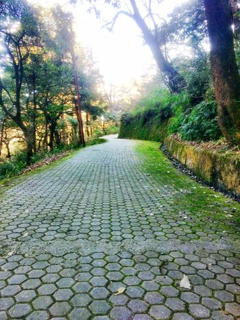 Walk Tree Nature The Way Forward Beauty In Nature Outdoors No People Day Scenics Growth Tranquility Garden Mussoorie Diaries Trees And Sky EyeEmNewHere