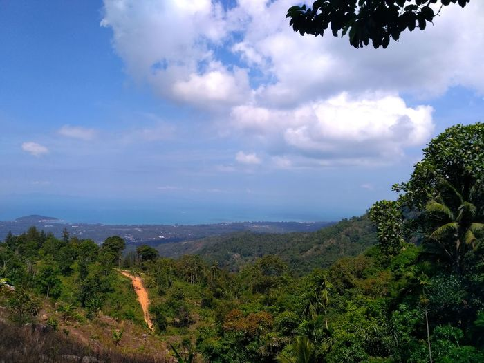 Ko Samui, Thailand Cloud - Sky Landscape Sky Rural Scene Nature Forest Outdoors Fruit Agriculture Tree Beauty In Nature Plant Archipelago Sea View Sea Life Travel Destinations Rocky Mountains Road Roadtrip Green Color Branch Stone Panoramic Nature Plant