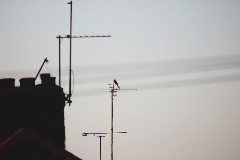 Low angle view of bird on antenna against sky