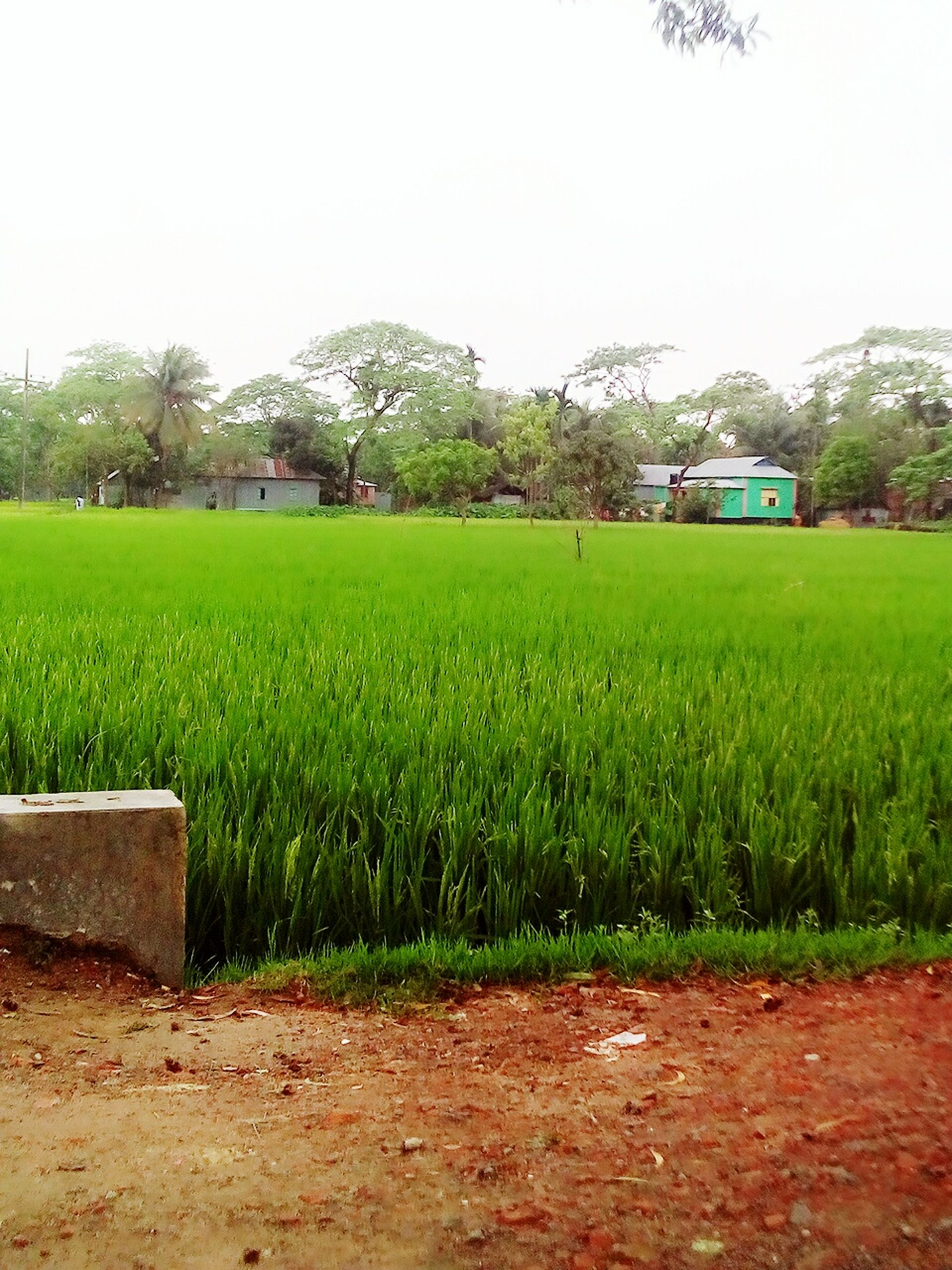green color, growth, grass, nature, field, tree, outdoors, day, plant, no people, building exterior, built structure, tranquility, sky, beauty in nature, landscape, architecture, scenics