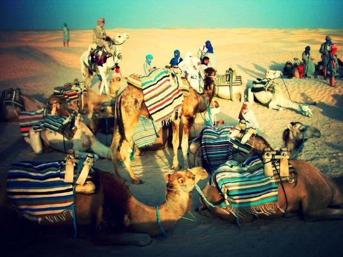 Tunisia Desert Sahara Caravan Camel Animal Themes Sand Mammal Day Landscape No People Outdoors Nature Sky An Eye For Travel An Eye For Travel