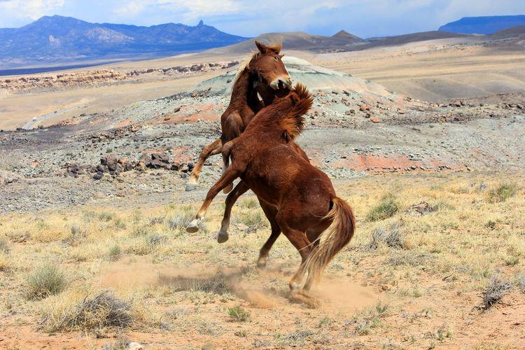 Horse on desert against sky