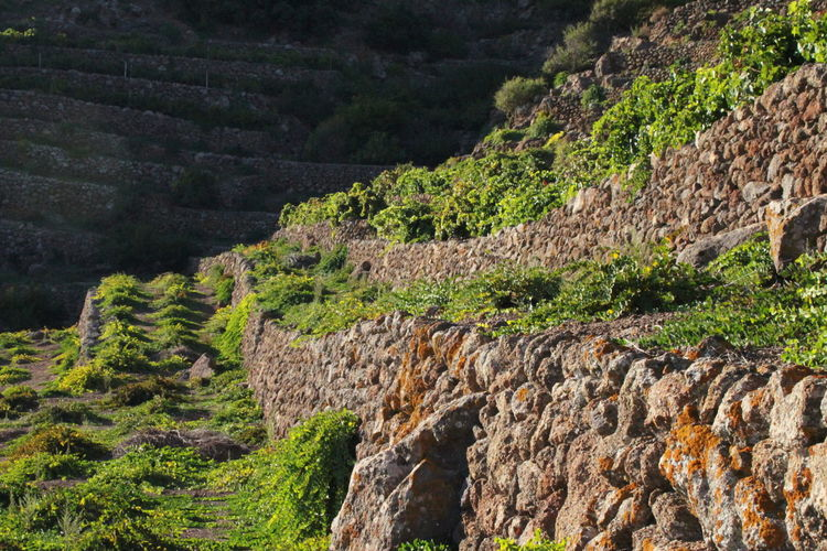 Pantelleria Day Green Color History Nature No People October 2015 Outdoors Rock - Object Stone Walls Sunlight And Shadow