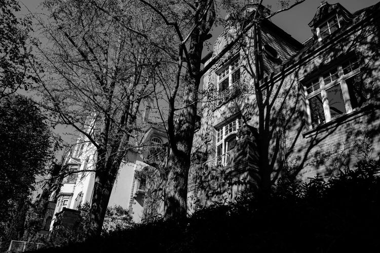 Urban Perspectives Black & White Street Photography Black And White Monochrome Tree Plant Building Exterior Architecture Built Structure Building No People Nature Low Angle View Residential District Branch Outdoors Night Bare Tree Growth House Sky Trunk Tree Trunk
