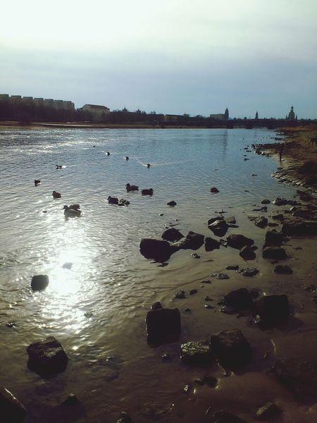 Elbe River Nature Outside