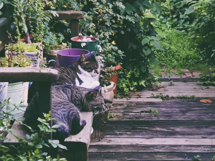 Plant Leaf Growth Day Nature Outdoors Flower Sitting Togetherness Mammal Vscogood Pet Portraits Animal Themes Pets Cats Of EyeEm VSCO Nikon Nikonphotography Vscocam Garden Photography Japan Photography Garden Japan Cats Cat