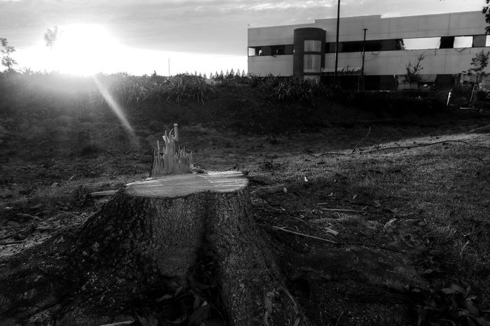 Demolition Demolition Zone Tree Stump Felled Tree Cut Down Monochrome Blackandwhite Dusk