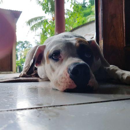One Animal Animal Themes Domestic Animals Pets Window Dog Indoors  Animal Head  Mammal Curiosity Relaxation Loyalty