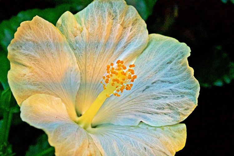 Flowering Plant Flower Fragility Vulnerability  Beauty In Nature Petal Flower Head Close-up Growth Outdoors Nature No People Botany Stamen Freshness Pollen Focus On Foreground Soft Focus Day