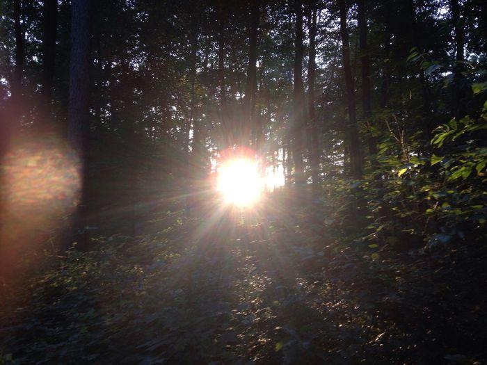 Wald Forrest Sun Sonne Summer Sommer Buchen Fagus Sylvatica Abendsonne