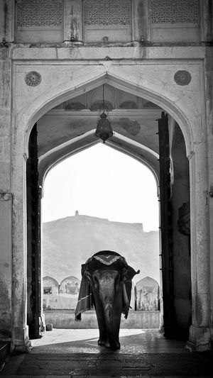 Rajasthan..... Rajasthan BLCK&WHT Blackandwhitephotography The Past History No People Day Indian Culture  Indian Summer Indianphotographers Close-up Elephent India Indiana