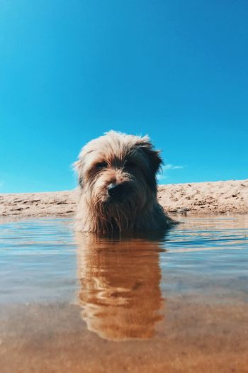 Dog in sea against clear sky
