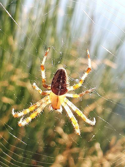 Full Length Web