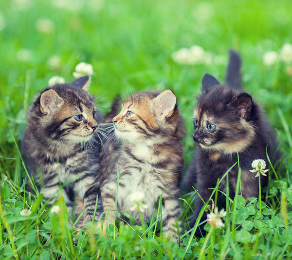 cute cats Domestic Cat Kitten No People Mammal Plant Young Animal Pets Two Animals Feline Domestic Domestic Animals Togetherness Group Of Animals Animal Themes Selective Focus Grass Cat Animal Family Animal Nature Small