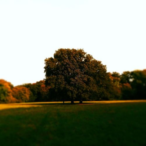 Lonelytree Lonelyasme Bremen Bürgerpark Goldenlight Autumn Lost In The Landscape