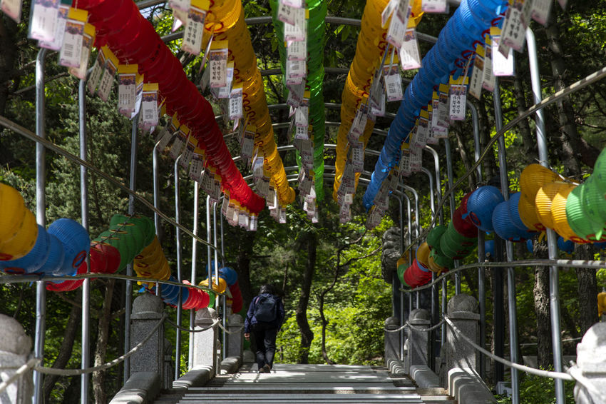 view at Bomunsa, a famous Buddhism temple in Seokmodo, Kimpo, Gyeonggido, South Korea Bomunsa Buddhism Temple Seokmodo South Korea South Korea🇰🇷 Animal Wildlife Architecture Buddhism Day Enjoyment Group Group Of People Hanging In A Row Leisure Activity Men Multi Colored Nature Outdoors People Plant Railing Real People Religion Representation Temple Tree
