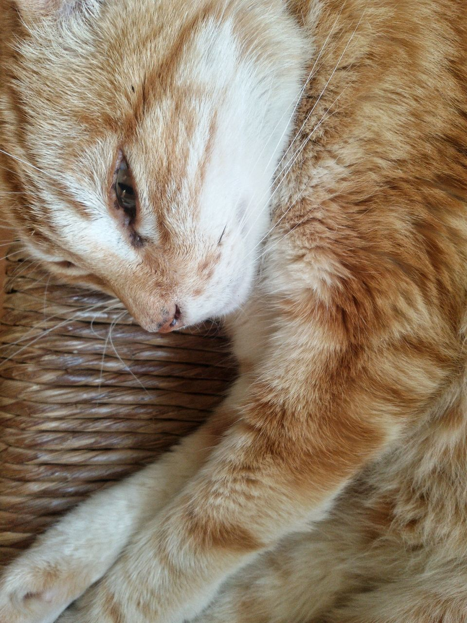 domestic cat, one animal, pets, animal themes, feline, domestic animals, mammal, cat, whisker, indoors, no people, close-up, ginger cat, day, nature
