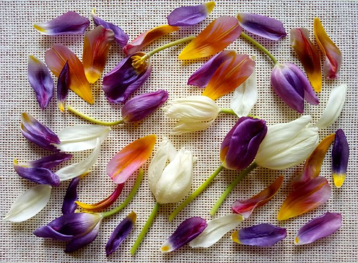 Directly above view of colorful flower petals