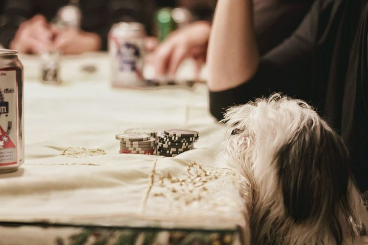 Puppy Poker Night Dog Cards Friends Family Time