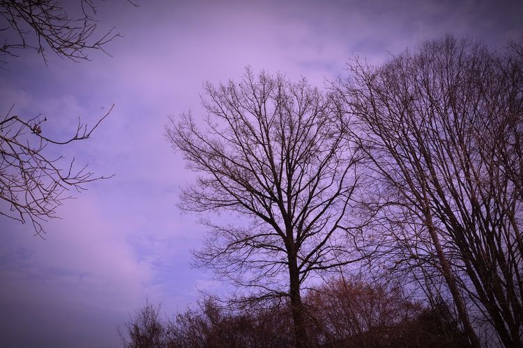 Nikonphotography Nikon D7100 Nature_collection Landscape_photography Kraigersee Nikon Kärnten Landscape #Nature #photography Tree Low Angle View Branch Sky Outdoors Nature Purple No People Silhouette Beauty In Nature Bare Tree Mobility In Mega Cities Colour Your Horizn EyeEmNewHere