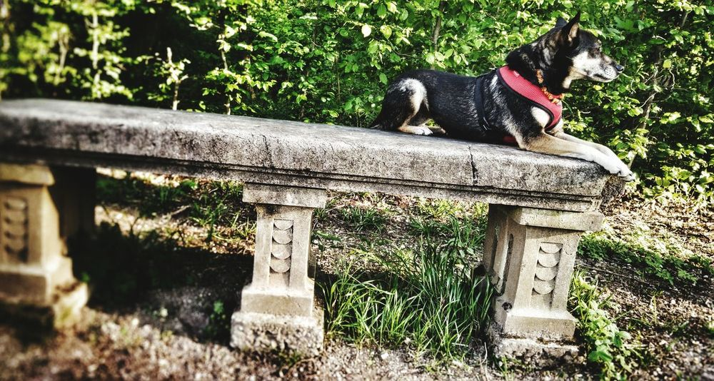 Dog Seat Bench Old Bench Sphynx Posing Dog I Love My Dog Walking In The Park Walking With My Dog Week On Eyeem
