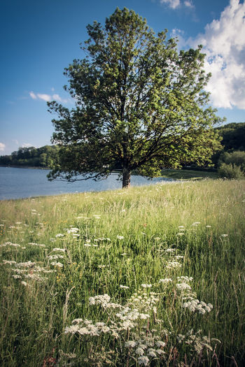 Beauty In Nature Cloud - Sky Environment Field Grass Green Color Growth Land Landscape Nature No People Non-urban Scene Outdoors Plant Scenics - Nature Sky Spring Tranquil Scene Tranquility Tree Water Wild Carrot