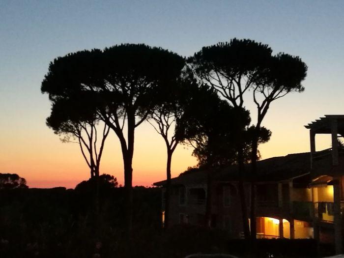 Sunset Silhouettes Pin Parasol