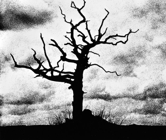 Tree Silhouette Tree Sillouette Grainy Images Moodyphotography Blackandwhite Photography Black & White Tree_collection  Trees Dramatic No People Darkroom Fun Darkroom Magic Darkroomphotography Monochrome Black And White Art Artistic Photo Artistic Taking Photos TakeoverContrast
