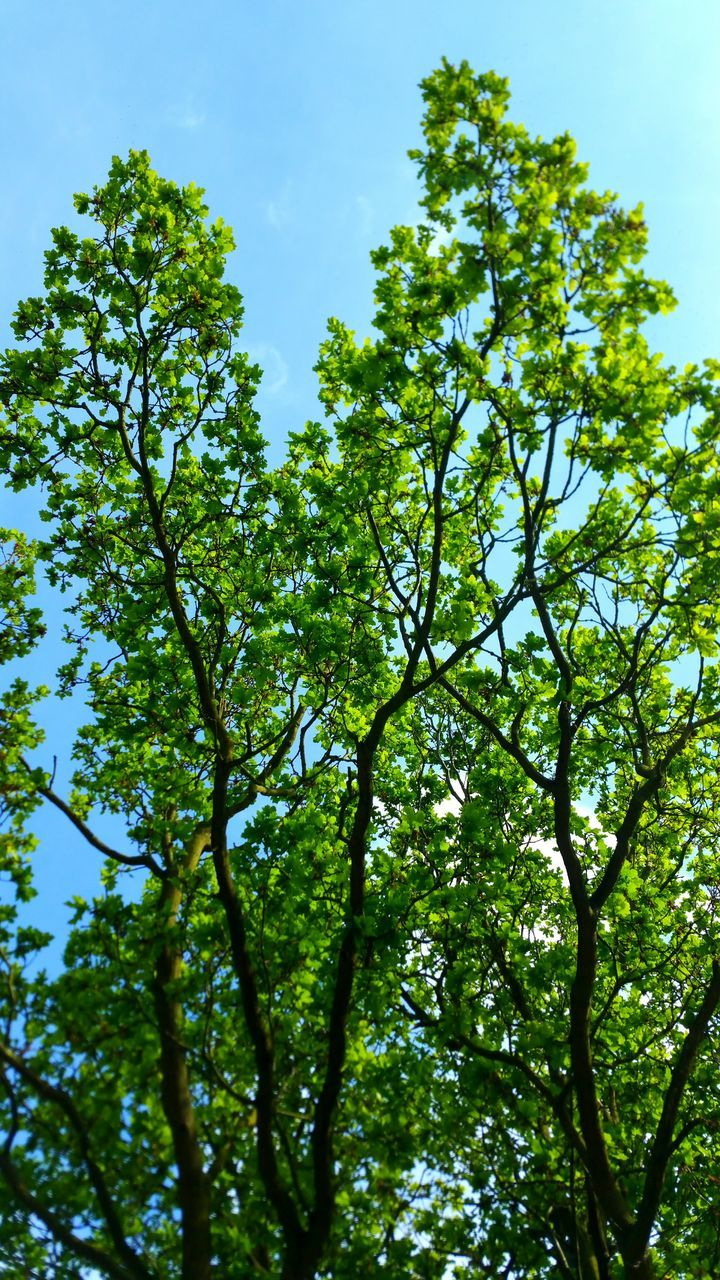 nature, green, green color, tree, growth, day, low angle view, beauty in nature, no people, outdoors