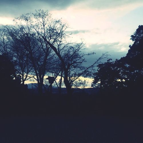 Evening Sky Black Shadow Trees Earlywinter Lastyearmemory Driving Sky And Clouds EyeEm