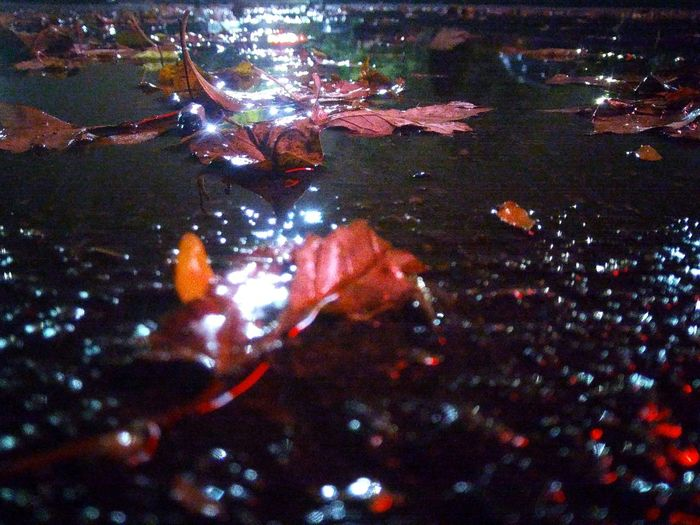 Puddle of autumn... Night Full Frame Outdoors Multi Colored Nature No People Puddle Autumn🍁🍁🍁 Autumn Colors EyeEm Best Shots EyeEm Gallery Exceptional Photographs EyeEm Masterclass