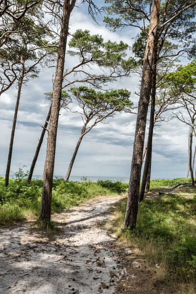Beauty In Nature Cloud - Sky Darß Day Empty Fell The Journey Grass Growth Holiday Landscape Light And Shadow Nature No People Non Urban Scene Outdoors Steep Coast The Way Forward Tranquil Scene Tranquility Tree Tree Trunk Way Weststrand