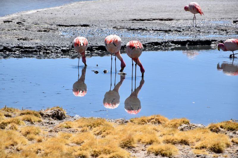 Birds drinking water in lake