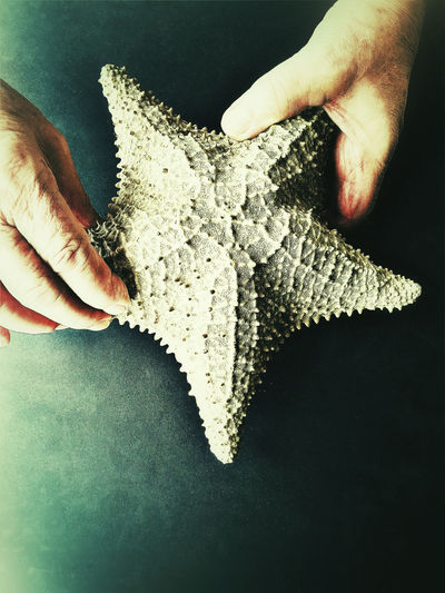 Man with starfish shell Bumpy Surface Close-up Copy Space Filtered Image Fingers Hands Holding Indoors  Man Marine Animal Natural Light One Person Overhead Phone Camera Shape Starfish  Textures