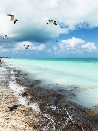 Sea gulls. Cayo Guillermo, Cuba. Sea Flying Sky Beauty In Nature Beach Cloud - Sky Caribbean One Of My Best Pictures  Sea Gulls BYOPaper! The Great Outdoors - 2017 EyeEm Awards EyeEmNewHere Live For The Story Cuba Cayo Guillermo, Cuba Turquoise Water Blue Sky Seascape Sea Birds Sea Bird In Flight Small Waves Scenery Bird Shadow EyeEm Selects Sommergefühle Neon Life Breathing Space EyeEm Ready   Go Higher Summer Exploratorium Visual Creativity The Great Outdoors - 2018 EyeEm Awards