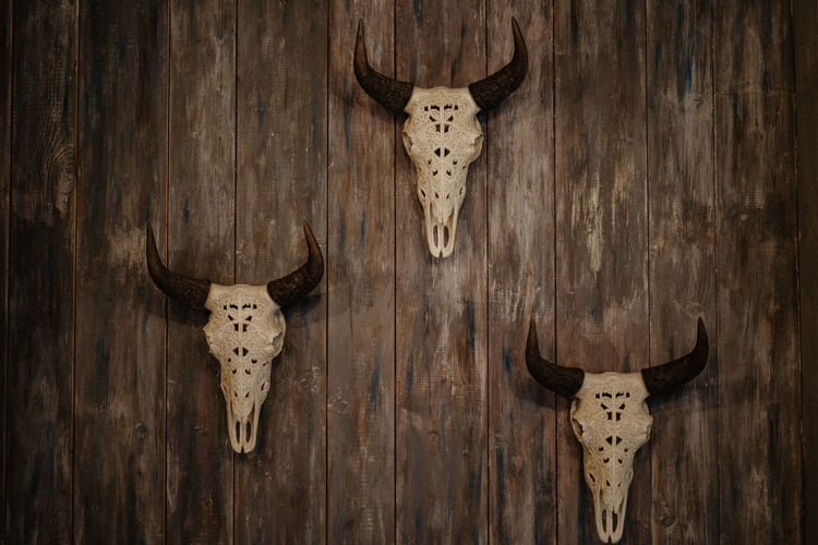 Close-up of animal skull hanging on wooden wall