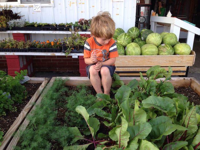 American Kid  Farm Life